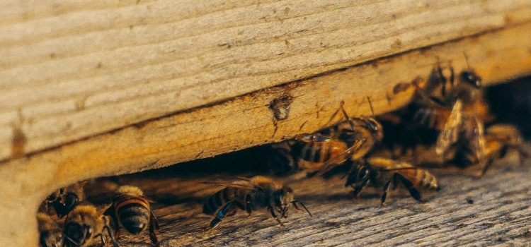 ips on controlling pests at home